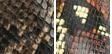 Driftwood Snake Multi