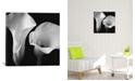 "iCanvas Softness Ii by Assaf Frank Wrapped Canvas Print - 26"" x 26"""