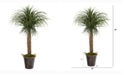 Nearly Natural 5ft. Pony Tail Palm Artificial Plant in Decorative Metal Pail with Rope