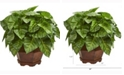 Nearly Natural 17in. Taro Artificial Plant in Decorative Planter