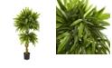 Nearly Natural Slim Mango Artificial Tree UV Resistant
