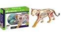 4D Master 4D Vision Tiger Anatomy Model