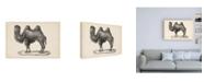 """Trademark Global Brodtmann Brodtmann Camel Canvas Art - 19.5"""" x 26"""""""