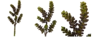 """Nearly Natural 13"""" Succulent Artificial Flower, Set of 12"""