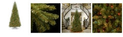 National Tree Company National Tree 9' Dunhill Fir Slim Tree with 800 Multicolor Lights