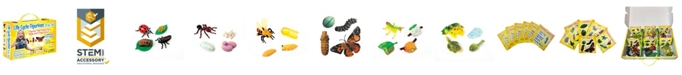 Insect Lore STEM Learning Life Cycle Stage Figurines
