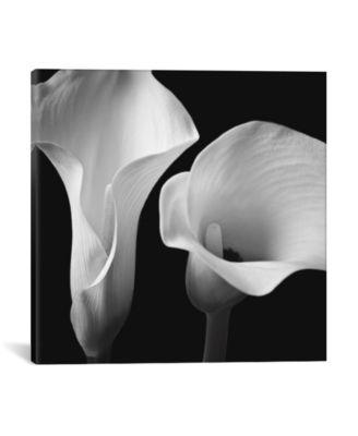 "Softness Ii by Assaf Frank Wrapped Canvas Print - 26"" x 26"""