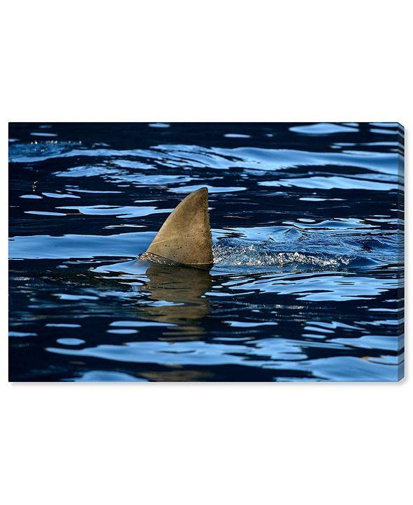 "Oliver Gal Great Whiteshark Fin, Shark Fin, Oceanshark Fin by David Fleetham Canvas Art, 24"" x 16"""