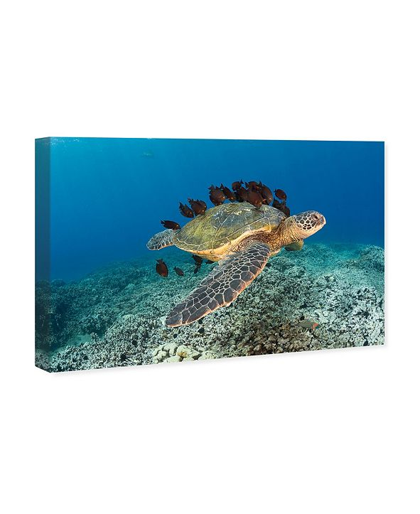"Oliver Gal Sea Turtle and Fish by David Fleetham Canvas Art, 36"" x 24"""