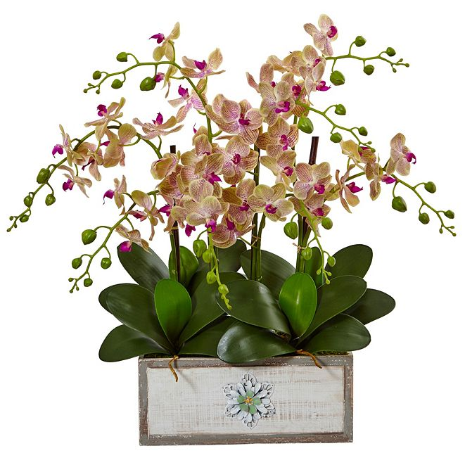 Nearly Natural Phalaenopsis Orchid Arrangement in Decorative Wood Planter