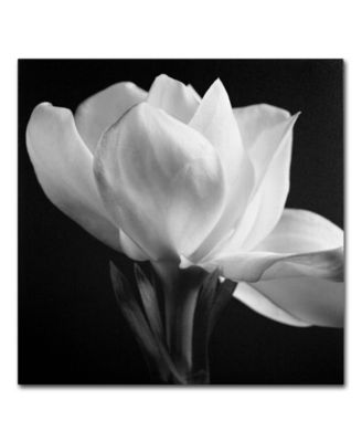 "'Gardenia' Canvas Print by Michael Harrison, 18"" x 18"""