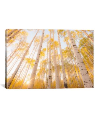 Colorado by Dan Ballard Wrapped Canvas Print - 18