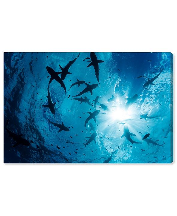 "Oliver Gal Gray Reef Shark Group by David Fleetham Canvas Art, 15"" x 10"""