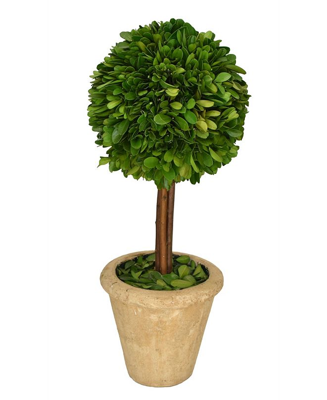 "Mills Floral 16"" H Preserved Boxwood Single Ball Topiary"