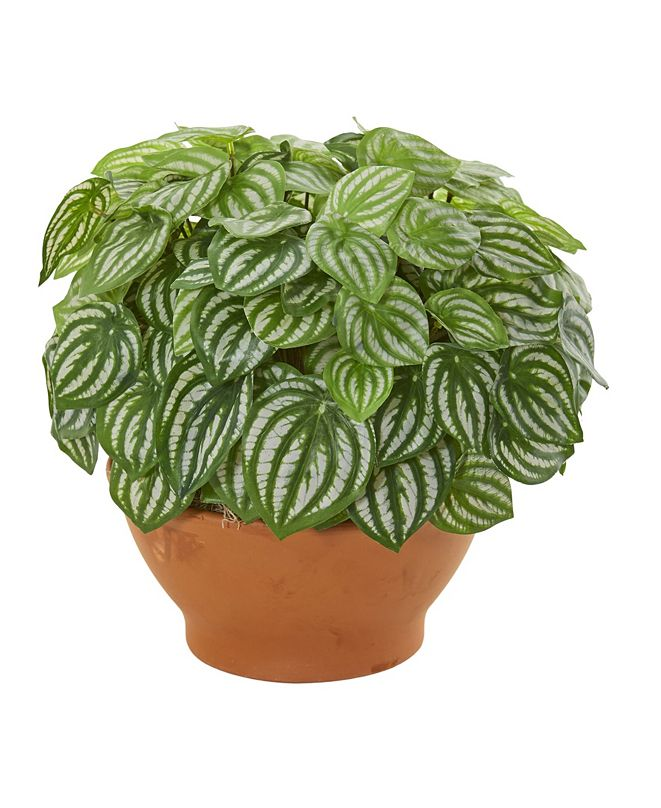 Nearly Natural Watermelon Peperomia Artificial Plant in Clay Planter (Real Touch)