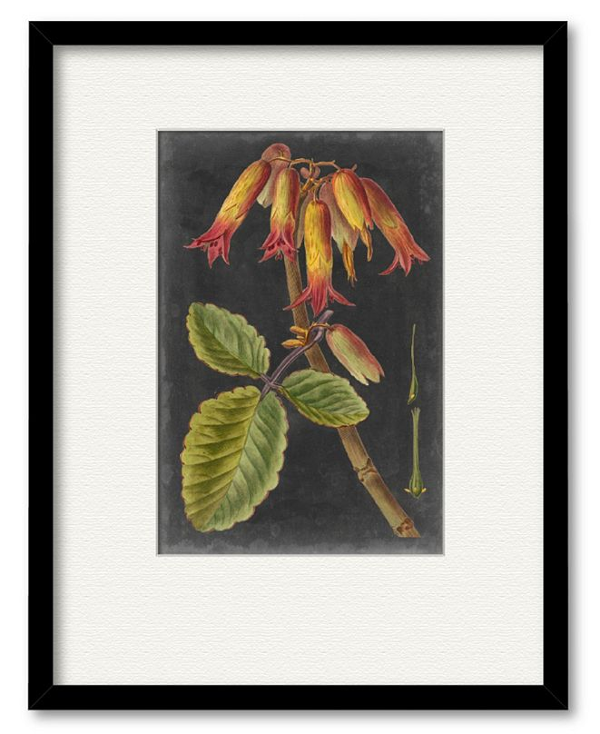 "Courtside Market Dramatic Tropicals III 16"" x 20"" Framed and Matted Art"