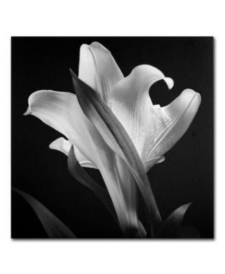 "'Lily' Canvas Print by Michael Harrison, 18"" x 18"""