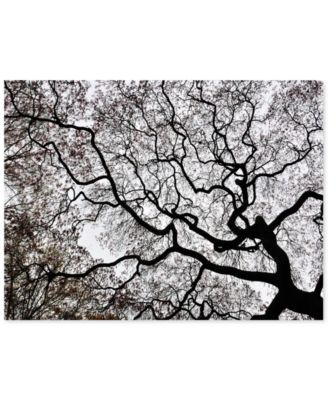 """'Japanese Maple Spring Abstract II' Canvas Print by Kurt Shaffer, 18"""" x 24"""""""