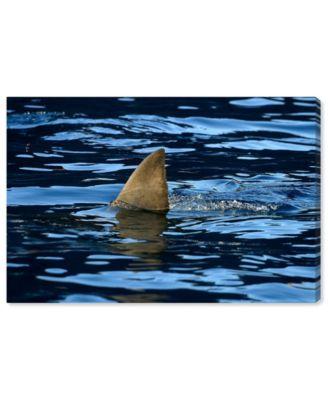 Great Whiteshark Fin, Shark Fin, Oceanshark Fin by David Fleetham Canvas Art, 24