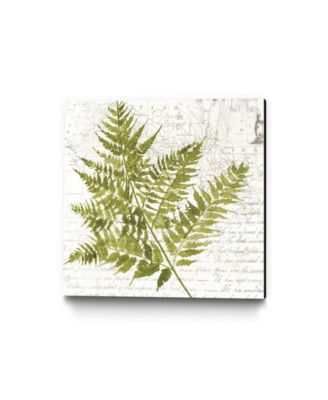 "20"" x 20"" Fern I Museum Mounted Canvas Print"