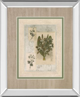 """Histoire Du Orchid VII by Carney Mirror Framed Print Wall Art, 34"""" x 40"""""""