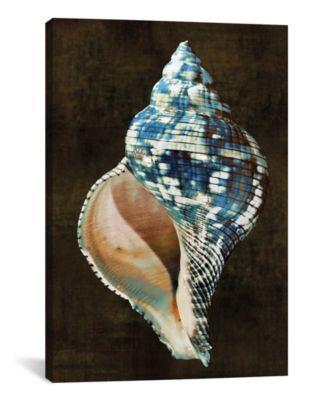 Ocean Treasure Iii by Caroline Kelly Wrapped Canvas Print - 40