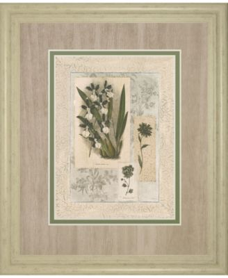 Histoire Du Orchid VII by Carney Framed Print Wall Art, 34