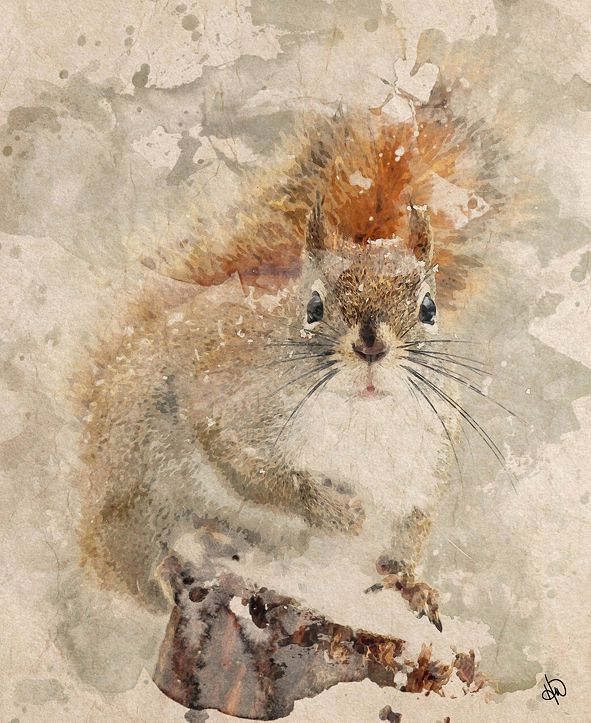 "Creative Gallery Winter Squirrel Watercolor 24"" X 36"" Canvas Wall Art Print"