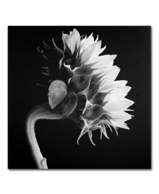 "'Sunflower' Canvas Print by Michael Harrison, 24"" x 24"""