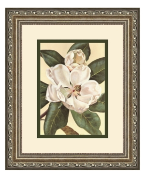 Amanti Art Afternoon Magnolia Framed Art Print by Waltraud Fuchs von Schwarzbek