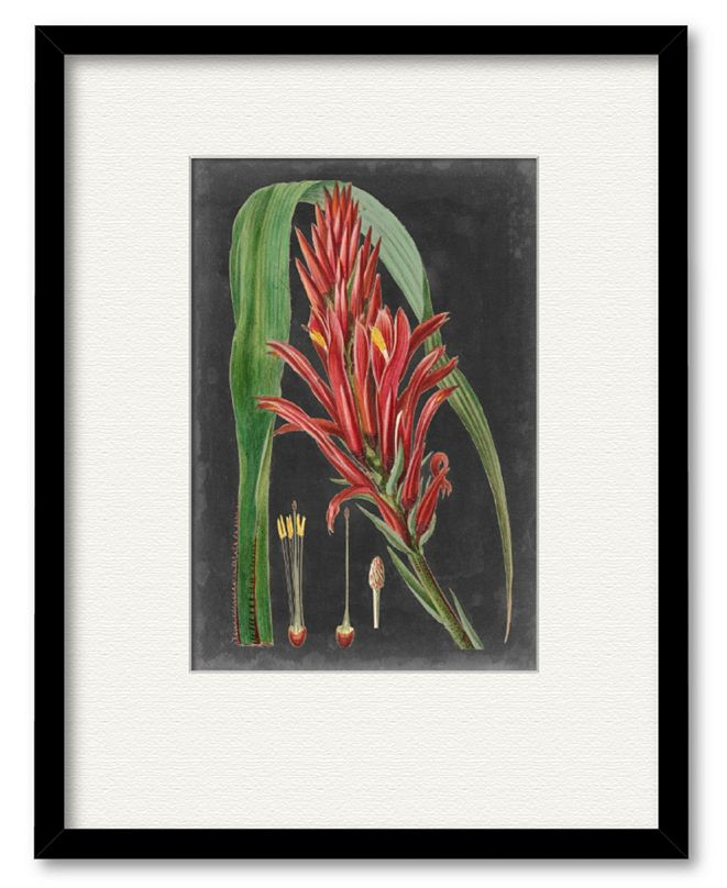 """Courtside Market Dramatic Tropicals II 16"""" x 20"""" Framed and Matted Art"""