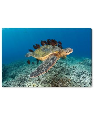 Sea Turtle and Fish by David Fleetham Canvas Art, 36