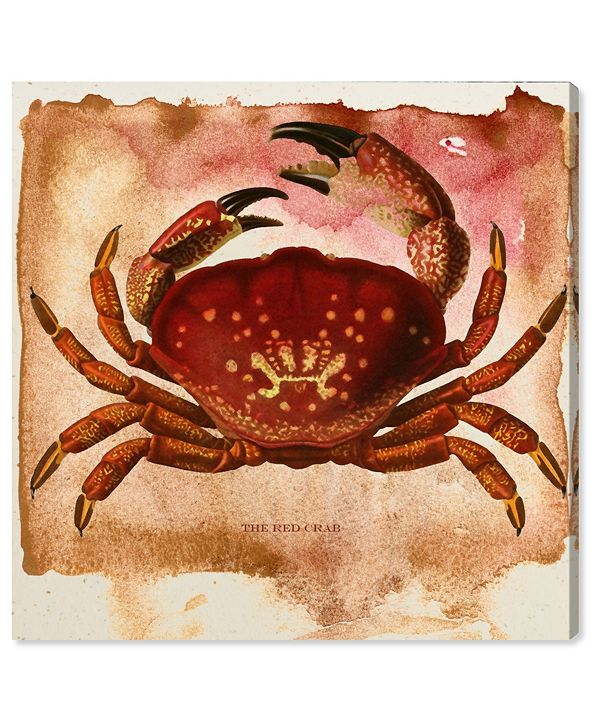 """Oliver Gal The Red Crab Canvas Art, 12"""" x 12"""""""
