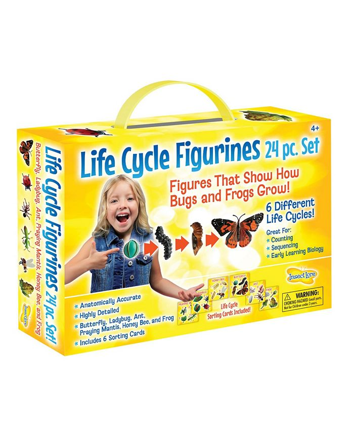 Insect Lore - STEM Learning Life Cycle Stage Figurines