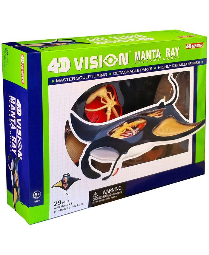 4D Master -