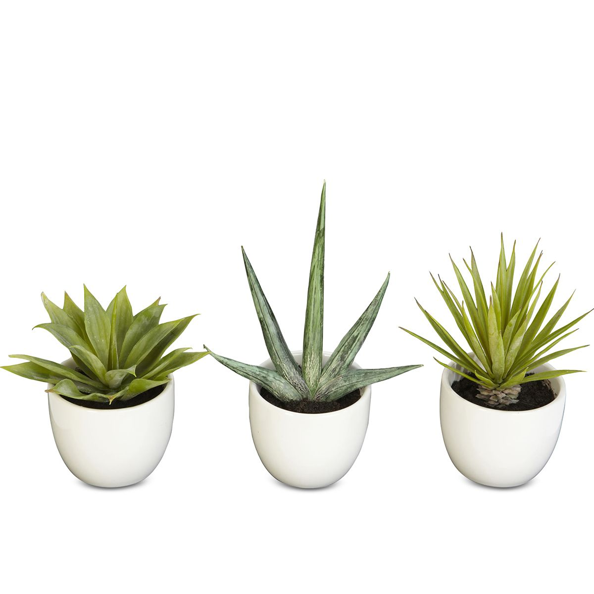 Artificial Succulents
